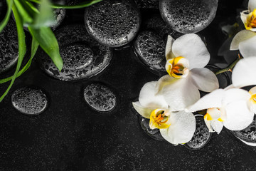 top view of spa concept white orchid (phalaenopsis), green leaves and black zen stones with drops in water