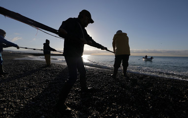 Fishermen drag their net during the traditional Poutine fishing in Cagnes-Sur-Mer