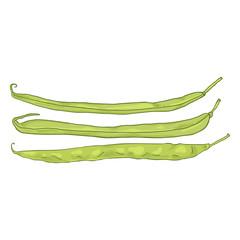 Vector Cartoon Green French Beans