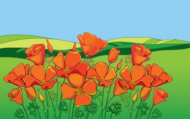 Obraz Outline orange California poppy flower or Eschscholzia, leaf and bud on the background with green field and blue sky. - fototapety do salonu