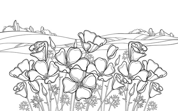 Outline California poppy flower or Eschscholzia, leaf and bud in black on the white background with field and sky.