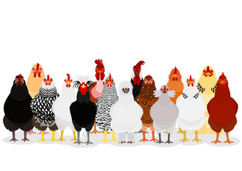 various chicken group