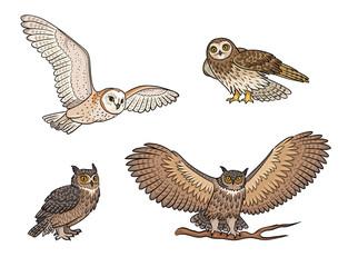 Wall Murals Owls cartoon Set of different owls - vector illustration