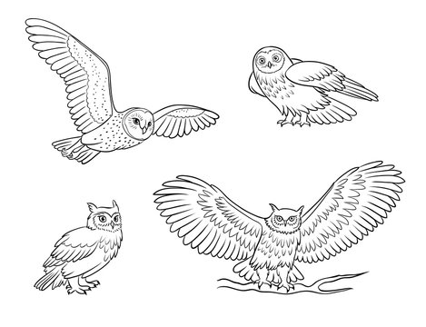 Realistic owls in outlines - vector illustration