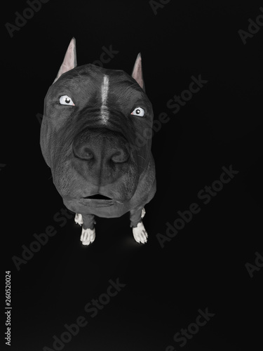 Pitbull Dog Looking At Photographer Wide Angle View 3d