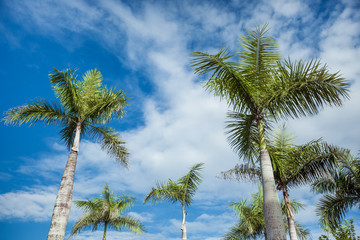 Green palm on blue sky background with clouds