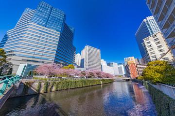 水辺に咲く桜とビル群