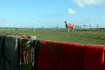 Focus on a horse in a field with blankets and harness draped over the fence in the foreground.