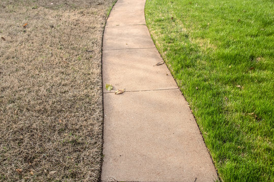 Sidewalk with green fescue on one side and brownish bermuda grass on the other side in the springtime