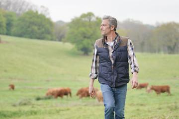 Fototapeta Farmer walking in field with cattle in the background obraz