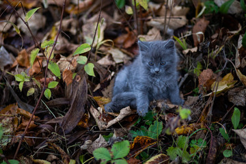 Domestic cat resting outdoor
