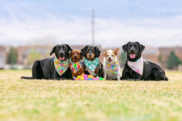 five dogs pose with plastic multicolored Easter eggs at a park