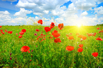 Wall Mural - Landscape nice sunset over spring poppy field