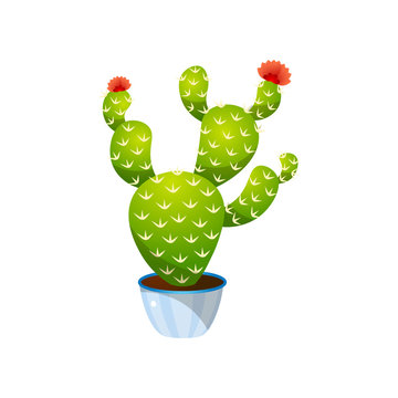 Green colorful bunny ears cactus in blue pot