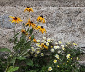 3c2554ebb607 Flowers against textured stone wall of authentic building