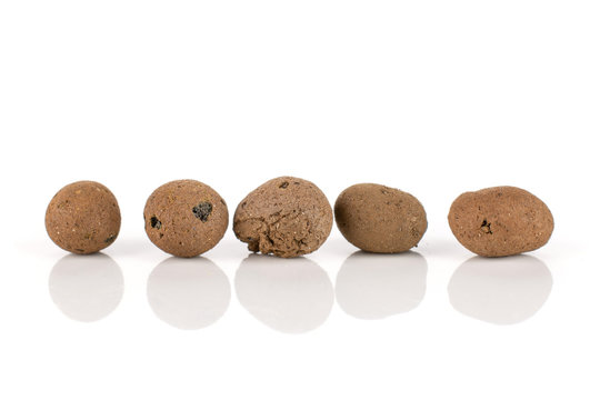 Group of five whole brown clay pebbles (leca) in row isolated on white background