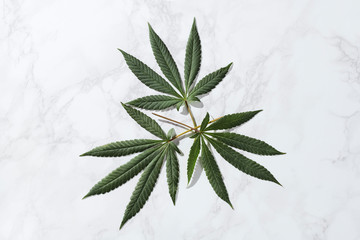 Group of 3 Cannabis Leaves from Marijuana Plant on Marble Stone Background Shot Overhead Top Down