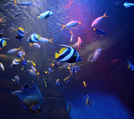 Photo Colorful fishes in blue water in the aquarium