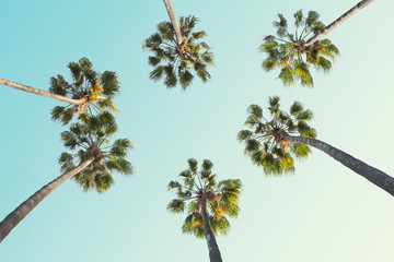 Wall Mural - Tropical palm trees on clear summer sky background.  Toned image.