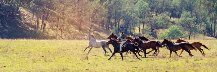 A Herd Of Wild Horses Racing Across Country
