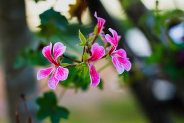 Agricultural Field, Springtime, Sky, Meadow, Flowerbed