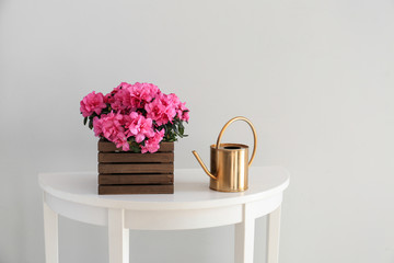 Beautiful blooming azalea and watering can on table against light background