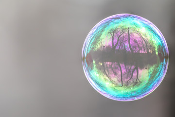 Lonely Colorful Soap Bubble with Reflection of Trees and Sky Inside It