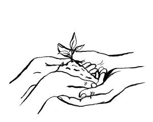 Teamwork und Wachstum mit Händen und Setzling