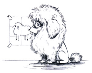 Niedlicher Pudel mit Mähne vor Vorlage von Schaf