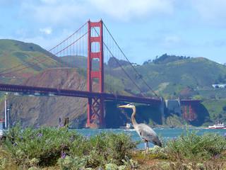 Heron looking at Golden Gate Bridge, San Francisco