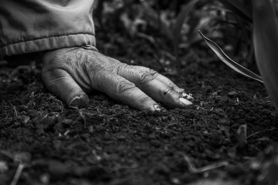 A female old hand on soil-earth. Close-up. Monochrome, BW, black and white. Concept of old age-youth, life, health, nature