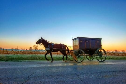 Amish Buggy Pre Dawn