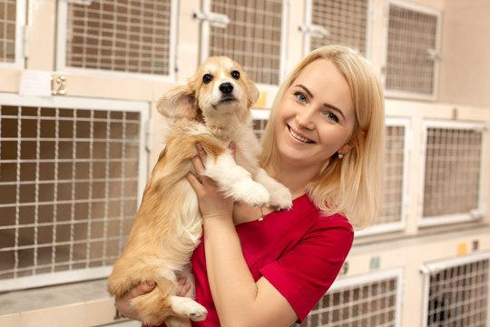 attractive blonde woman vet hold little corgi dog on her hands at pet hospital. Pet healthcare