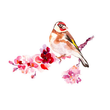 Watercolor spring bird on sakura tree branch. Hand painted cherry blossom with pink petals and goldfinch, isolated on white background. Decorative elements for cards design, symbols of new season.