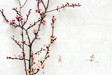 Spring blooming branch lying down on pink pastel background with copyspace