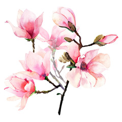 Beautiful lovely tender herbal wonderful floral summer bouquet of a pink Japanese magnolia flowers watercolor hand illustration. Perfect for textile, wallpapers, invitation, wrapping paper, phone case