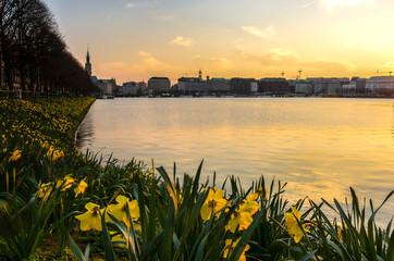 Osterglocken an der Binnenalster in Hamburg an einem sonnigen Tag