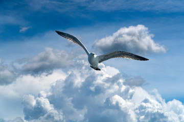 seagull flying on cloudy sky