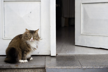 Brave fat cat guarding a white door, standing in front, copy space