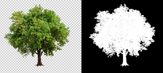 single tree on transparent picture background with clipping path, single tree with clipping path and alpha channel on black background Wall mural