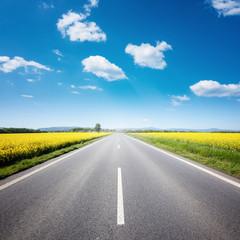 Asphalt road among the summer field under blue cloudy sky