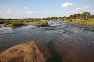 Foto auf AluDibond Elefant Olifants River / Olifants River /