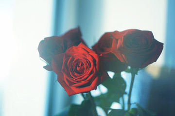 Red rose on the window background wallpaper texture view beautiful flora romantic lovely bouquet present love bloom flower style faded calm