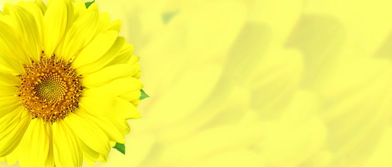yellow  colorful flower blur background