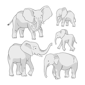 Set with isolated vector objects, elephant big and baby on white background