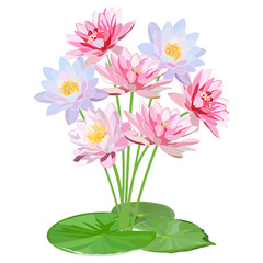 delicate bouquet of pink and blue water lilies with large round leaves isolated on white background
