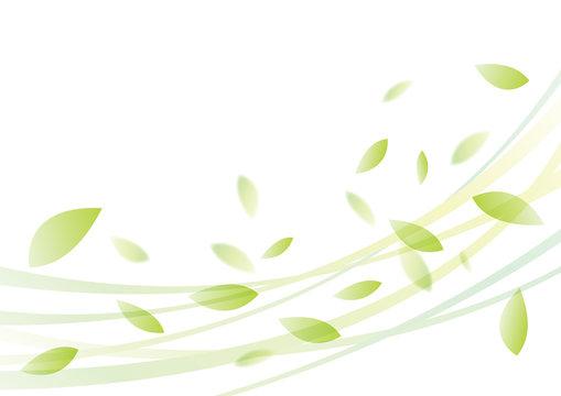 葉 風 夏 背景 緑