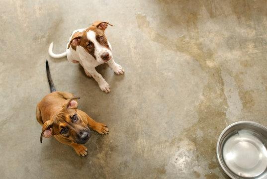Dog Animal Rescue Shelter