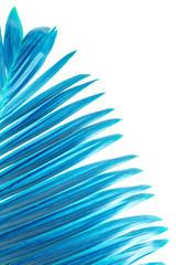 Palme bleue