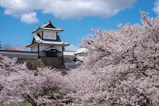 金沢城 石川門と満開の桜
